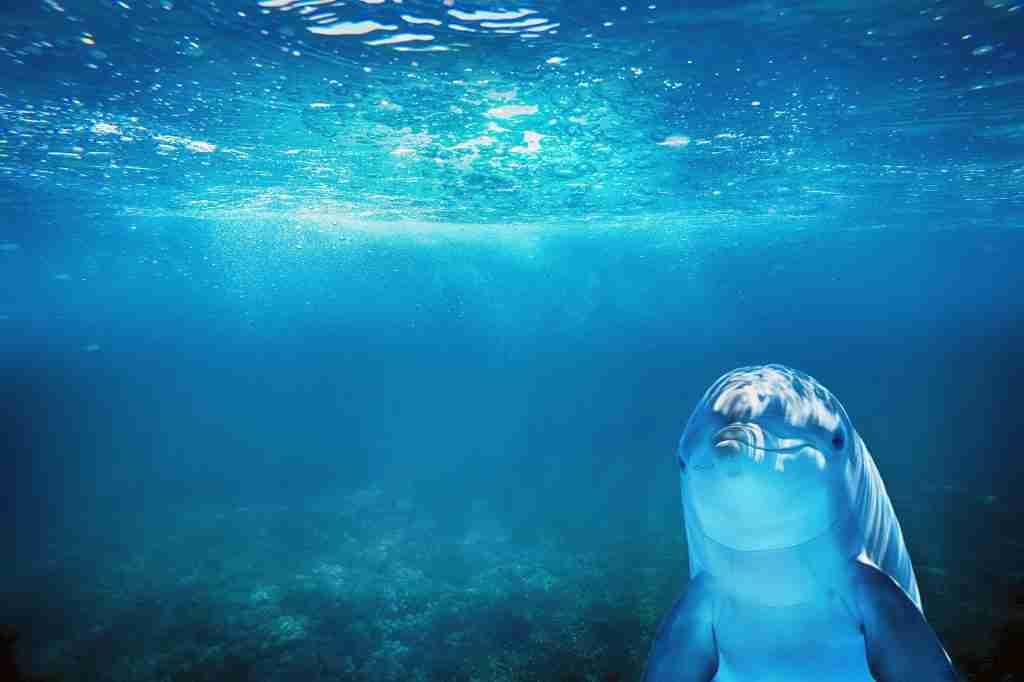 Delfino che nuota nell'oceano