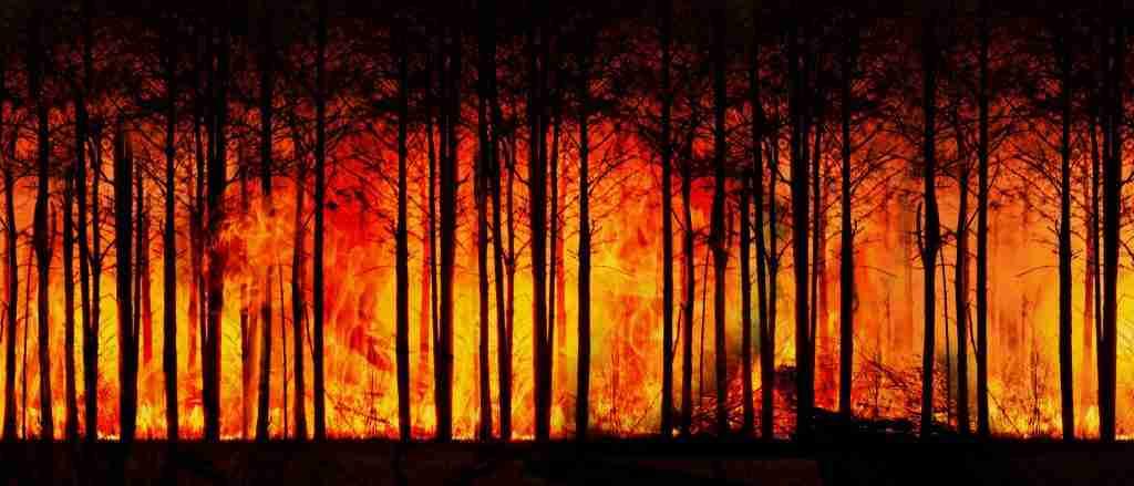 Foresta in fiamme per l'articolo Se il Brasile brucia, il Pianeta muore