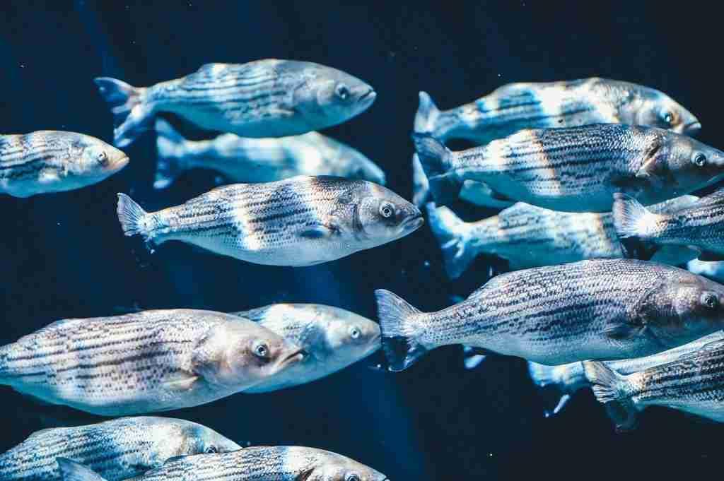 Pesci che nuotano in mare