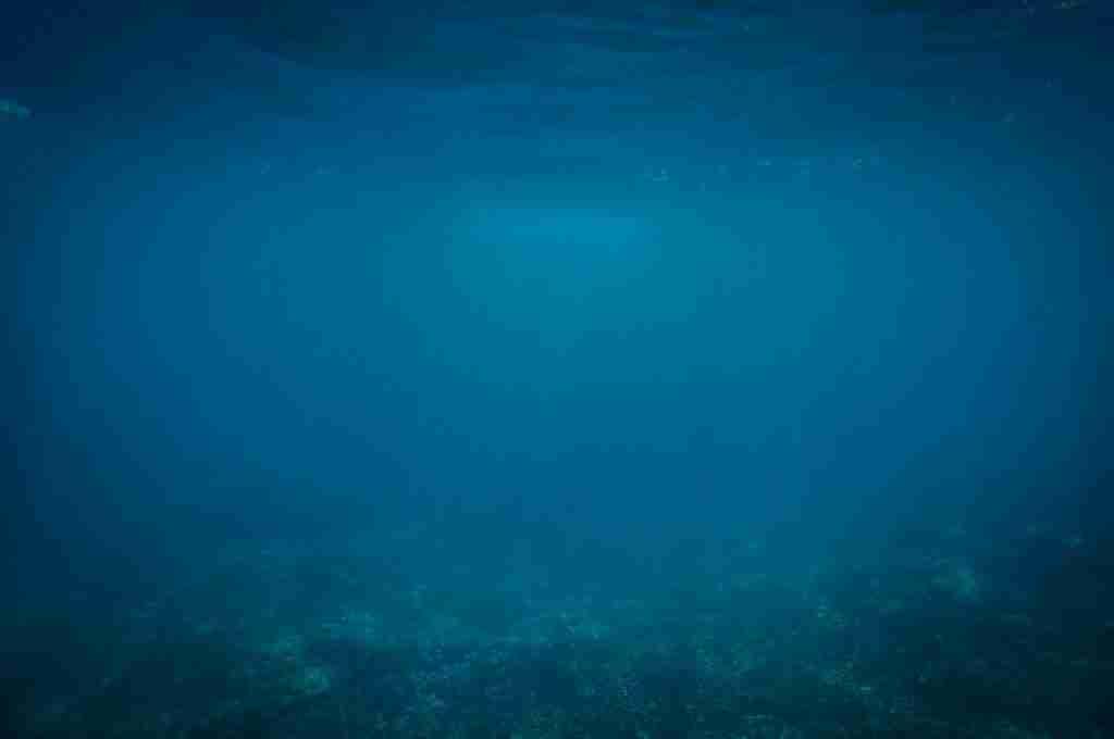 Immagine subacquea oceano senza pesci per l'articolo Il tonno: è allarme estinzione