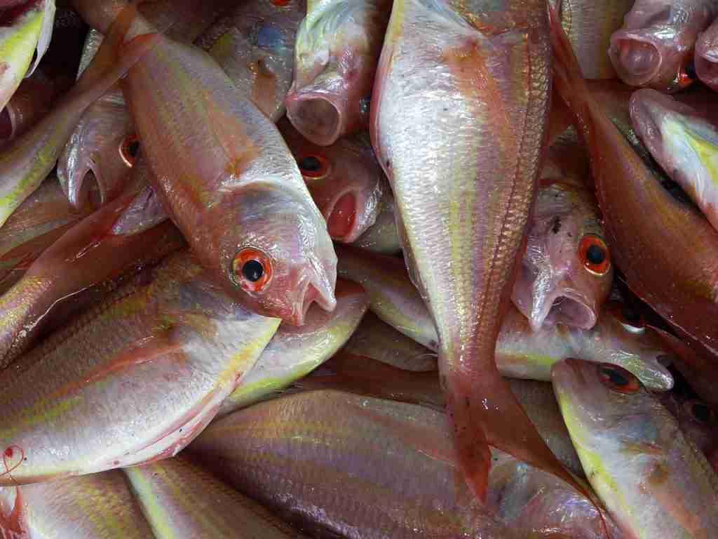 Pesce morto per articolo Allevamenti ittici: anche in India crudeltà e violenza
